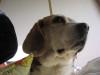 Dumbo_20090215_16