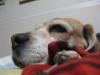 Dumbo_20090222_65