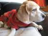 Dumbo_20090308_04