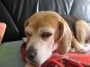 Dumbo_20090321_13