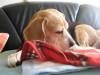 Dumbo_20090321_16
