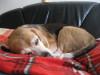 Dumbo_20090321_22