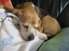 Dumbo_20090329_05