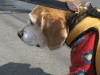 Dumbo_20090405_16