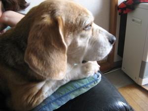 Dumbo_20090516_01