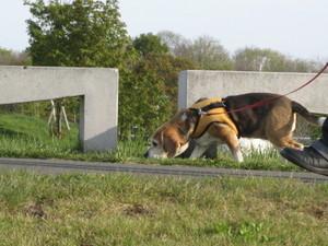 Dumbo_20090516_46