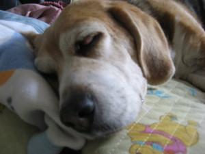 Dumbo_20090531_05