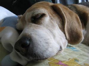 Dumbo_20090531_09