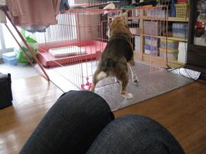 Dumbo_20090614_13