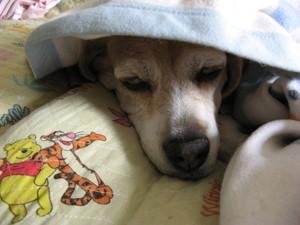 Dumbo_20090621_38