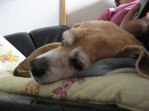 Dumbo_20090621_55