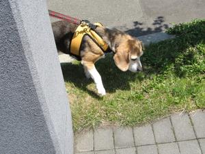 Dumbo_20090627_053