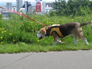 Dumbo_20090627_096