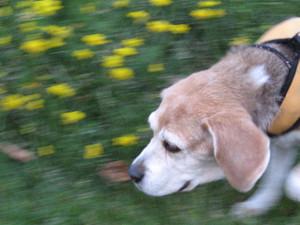 Dumbo_20090628_66