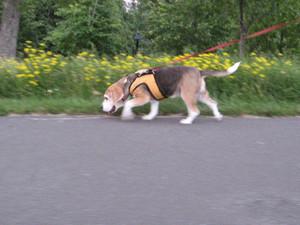 Dumbo_20090705_074