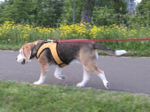 Dumbo_20090707_068