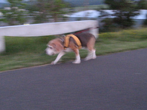 Dumbo_20090712_23