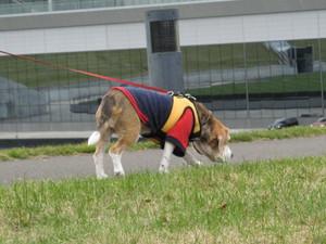 Dumbo_20091031_38