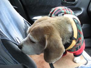 Dumbo_20091115_32