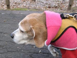 Dumbo_20091213_31