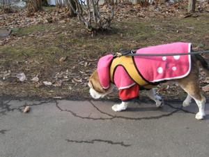 Dumbo_20091213_38