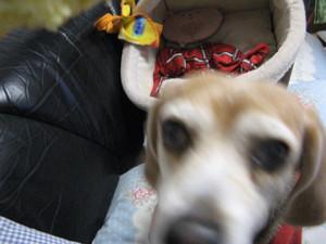Dumbo_20091223_26