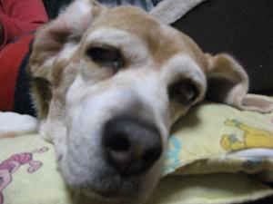 Dumbo_20100111_41