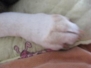 Dumbo_20100131_25