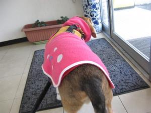 Dumbo_20100313_06