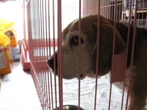 Dumbo_20100502_46