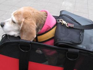 Dumbo_20100509_31