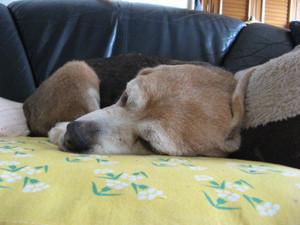 Dumbo_20100703_04