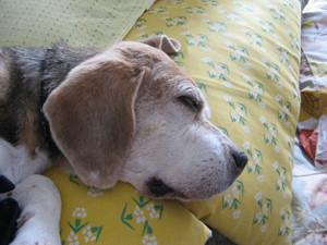 Dumbo_20100814_02