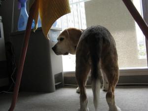 Dumbo_20100814_24