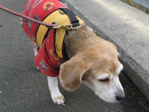 Dumbo_20101205_13