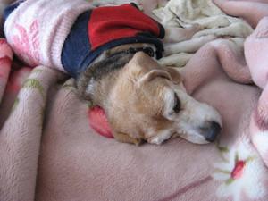 Dumbo_20110212_27