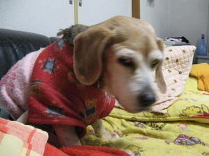 Dumbo_20110219_30