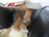 Dumbo20070523_042
