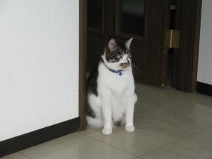 Dumbo_20110306_27