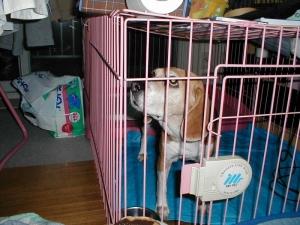 Dumbo_20051224_01