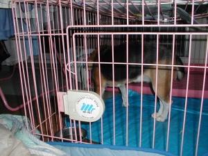 Dumbo_20051224_06