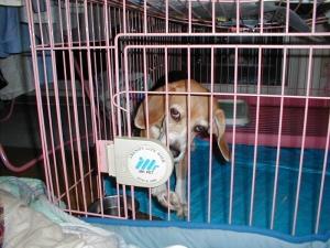 Dumbo_20051224_07