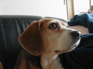 Dumbo_20060611_09