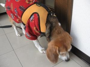 Dumbo_20061119_12