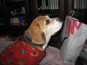 Dumbo_20061119_29